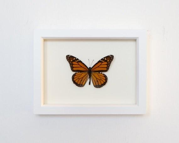 Real Framed Butterfly Monarch Butterfly