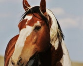 A Kind Face 8x10 Fine Art Print,wild mustang,wild horse,free shipping