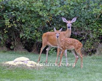 Deer: Mama and Baby pose for me.