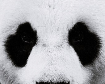 The Panda 1 - black and white Window To The Soul of A Lovely panda winter nursery deco zoo travel gift idea black and white photography