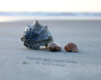 Found - Shells Beach Photography Folly Charleston Carolina SC Nautical Cottage Minimalist Sand Shore Coastal Decor - 8x10 Photograph