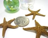 Beach Decor Brown Starfish - Nautical Decor or Beach Wedding Starfish, 12pc,  1-2  inch