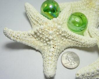 Beach Decor Starfish - Nautical Decor White Jungle Starfish, 3 PC, 4 inch