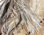 """50- SALON Pack- Long Rooster Hackle Feathers (7-10"""" plus) For Hair Extensions and crafts- Assorted Naturals"""