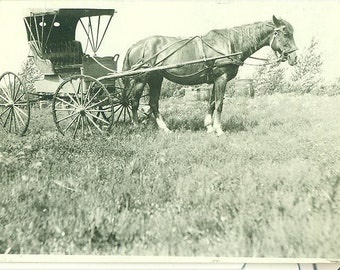 Horse and Buggy Carriage Side View Photo Antique Vintage Photograph Picture Snapshot