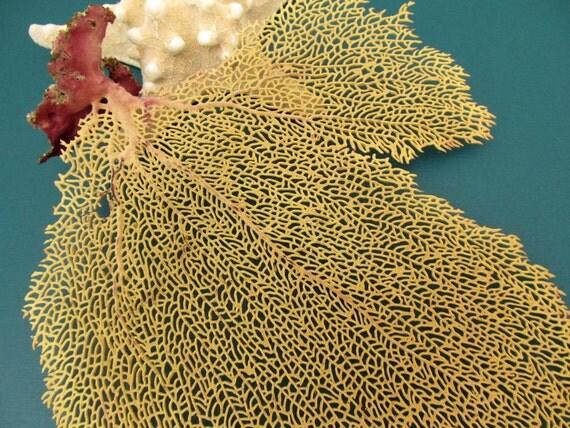 Sea Fan Coral Beach Decor, number 22