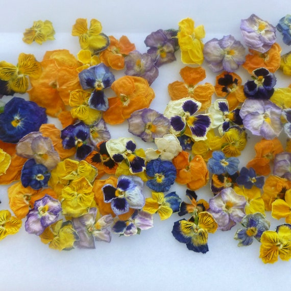Edible Real Flowers For Cake Decorating : Dry Flowers Dried Pansies Edible Flowers Real by LarkspurHill