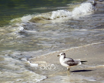 "12"" x 18"" Ready to Hang Seagull on the Beach Canvas Print"