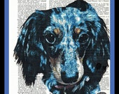 Buy Any  2 Get 1 Free Your pet Family Pet on a dictionary page