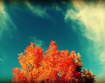Perfect Fall Photograph, Autumn Wall Decor, Orange Tree Art, Color Landscape Photography, Fall Foliage Decor