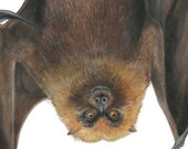 Bat Flying Fox- Halloween Watercolor Painting 14 x 18