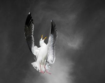 Beach Art, Fine Art Print, Western Gull, Seagull, Limited Edition Photography, Bird Art Print, Call with Cirrus Clouds