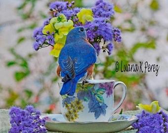 Bluebird Photography