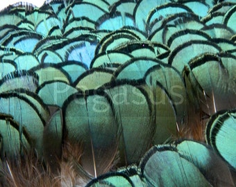 Loose Emerald Green Lady Amherst Feathers (12 Feathers)(1 - 2 inches long) For wedding bouquets, boutonnieres, shoe clips, hair extensions
