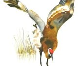 "Limited Edition GICLEE Print /  ""Rusty Dance"" /  Sandhill Crane"