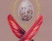 "Cardinal Egg & Feathers Illustration 5""x7"" Giclee Mini Print - ""Stately Bits"""