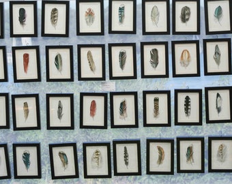 Darwin's Feather Collection - 25 Original Watercolor Feather Studies