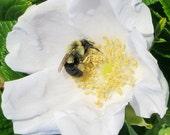 White Rose Butter - 1 oz jar