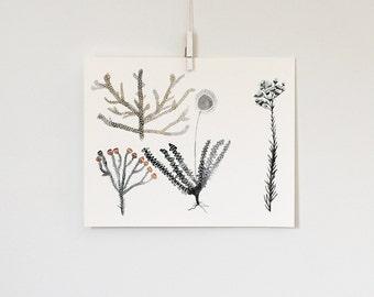Land Botanicals 1, 8x10 print