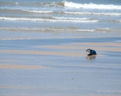 Isolation 8x12 Fine art photography print, nature, wildlife, seals, sea lions