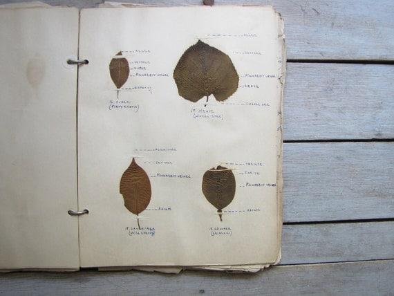 1930s botany notebook