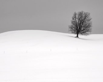 Lone Winter Barren Tree on top of a Snow covered Hill by Byron Center in West Michigan A Fine Art Black and White Landscape Photograph