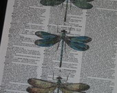 BOGO SALE Dictionary Art Print Dragonfly Dictionary Art Print Vintage Dictionary Book Page Print Upcycled