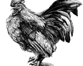 Rooster 11x8.5  pen drawing print  from original,  holiday present / birthday present or various card
