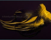 Yellow Craft Feathers Jewelry Making Feather Supplies Rooster Saddle Hand Dyed Feathers for Crafts Yellow Laced Black Rooster Saddle, 12 pc