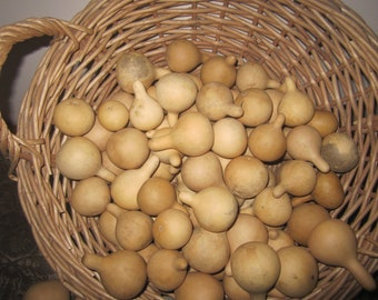 20 Tennessee Spinner Gourds, bowl filler, tiny gourds, jewelry gourds