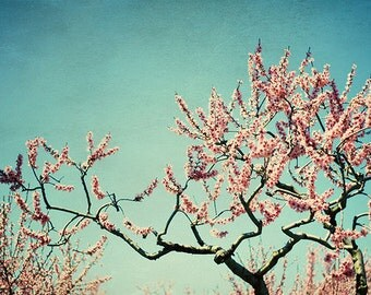 Cherry blossom orchard: Naturally Wild Fine Art Photography Blue sky nature photography wall art girls room art prints Spring Tree Art Print