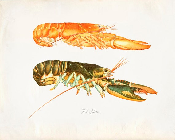 Vintage pair of Red Lobster Female and Male Print 8x10 P211