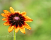 Daisy print different - floral fine art photography 9x6