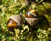 2 Acorn Jewels - Tigers Eye - Strength - A Supply from the Gnoom Forest
