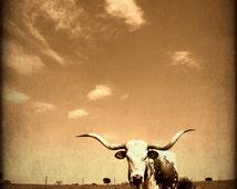Longhorn,Fine Art Photograph Western Photography,Texas Photography,Southwestern Decor
