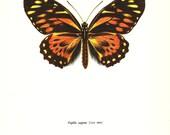 BUTTERFLY PRINT Art Original 1965 Book Plate 34 Beautiful DOUBLEDAY Butterfly Orange Summer Garden Flower Nature Home Decor