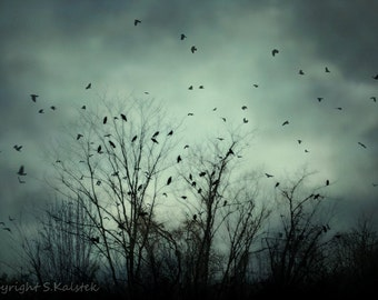Surreal Crow Photography Deep Teal Blue Green Photograph Bare Branches Black birds In Flight 8x12