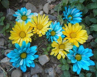Alphabet Letter N Photograph Digital Blue and Yellow Flowers Instant Download 5 Photographs