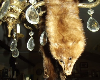 Taxidermy Mink or Fur Scrap