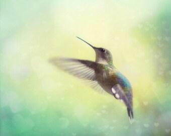Hummingbird Photography, Hummingbird Photo, Hummingbird Picture, Mint Aqua Green Wall Art, Nursery Art, Bird Photography, 8x10 11x14 Print