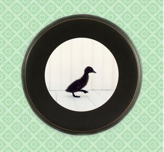 Framed Nursery Art, framed photography, little black duck, duckling, minimalist black & white, unique 16x16 round black frame, 12x12 Print