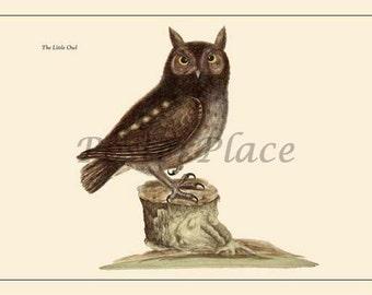 Owl ART CARD - Catesby bird print reproduction 7011