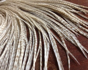All Natural Feather Extensions Long 5 Faint Cream Tan Grizzly Feathers, Feather Hair Extensions or crafts Cool Highlights Effect