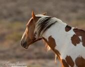 Picasso at Dawn - Fine Art Wild Horse Photograph - Wild Horse - Picasso