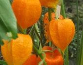 "LIMITED EDITION -- Orange Chinese Lanterns  -- 8""x10"" Fine Art Print Home Decor"