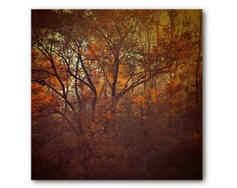 Orange Tree Photo,  landscape tree print, fall, foliage, forest, nature, landscape, brown, home decor, dramatic landscape