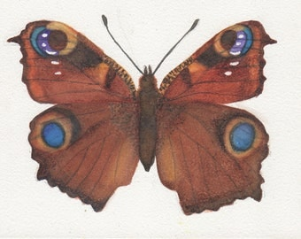 5 x 7 Brown, Gold and splash of Blue Butterfly Print
