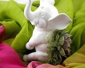 Succulent Planter Centerpiece - White Hindu Elephant Animal Planter