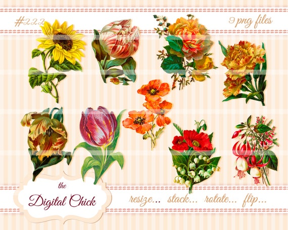 Digital Clipart, instant download, Vintage Flower Clip Art--Sunflower Poppy Tulip carnation, lily spring fuchsia Images--PNG files   222