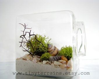 Modern Beach Cube Lichen Terrarium: White, Natural or Black Sand